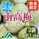 氷梅 冷凍南高梅(梅酒用・梅ジュース用) 1.5kg(500g×3袋) ☆和歌山県紀州産青梅 冷凍梅