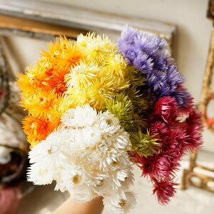 大地農園ミニシルバーデイジー 全6色 【 ドライフラワー ハーバリウム 花材 材料 資材 造花 】