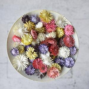 チーゼルフラワー 全2色 【 ドライフラワー ハーバリウム 花材 材料 資材 造花 】
