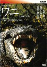 【バーゲンセール DVD】【中古】DVD▼BBCワイルド ライフ・スペシャル ワニ 水辺の侵略者▽レンタル落ち