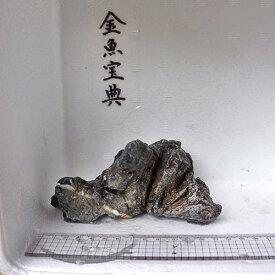 【金魚宝典】昇竜石(13cm+−)☆天然石です!☆