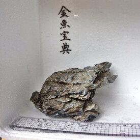【金魚宝典】昇竜石(15cm+−)☆天然石です!☆