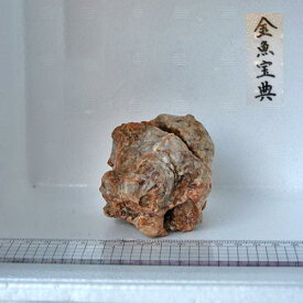 【金魚宝典】天然チベット産石(8cm+−)☆天然石です!☆