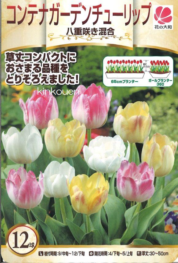 □ コンテナガーデンチューリップ八重咲き混合12球