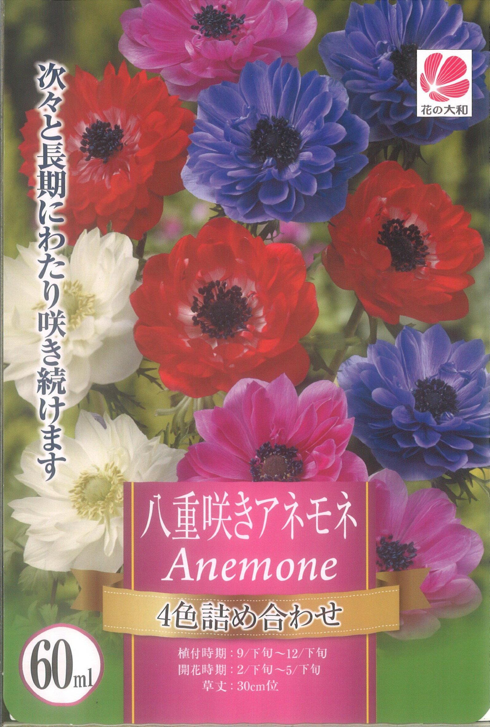 □ 八重咲きアネモネ4色詰め合わせ 60ml