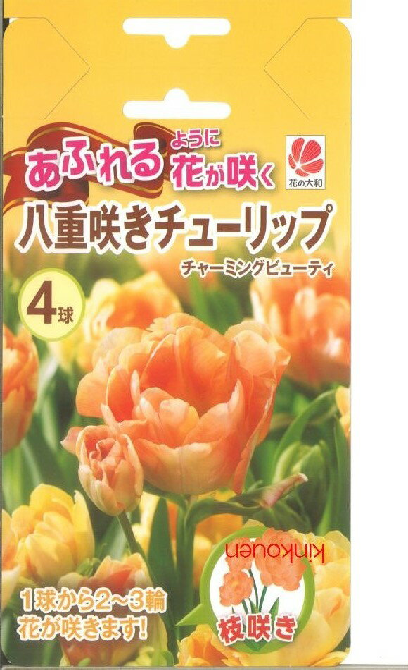 □ 八重咲きチューリップチャーミングビューティ4球