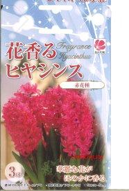 【先行予約!!】【10月より出荷】 □ 花香るヒヤシンス 赤花種 3球