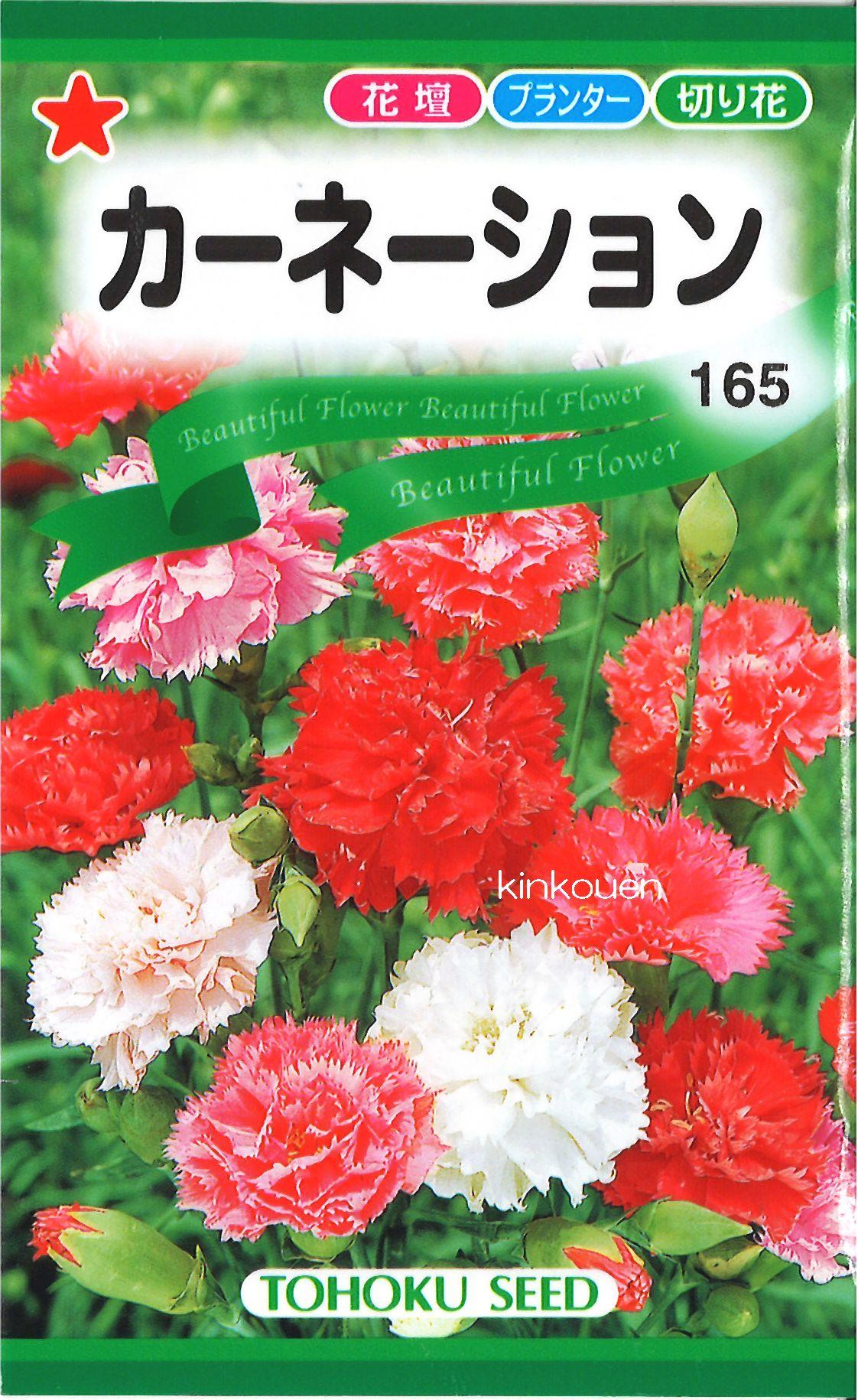 《代引不可》《5袋まで送料80円》 □カーネーション
