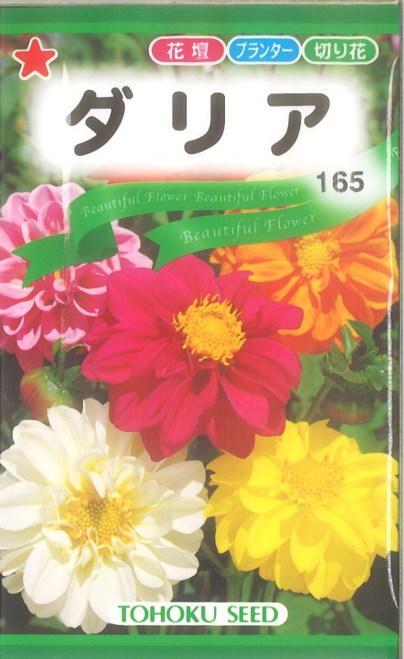 【代引不可】【5袋まで送料80円】 □ダリア