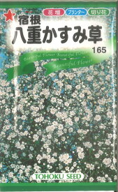【代引不可】【送料5袋まで80円】 □宿根八重かすみ草