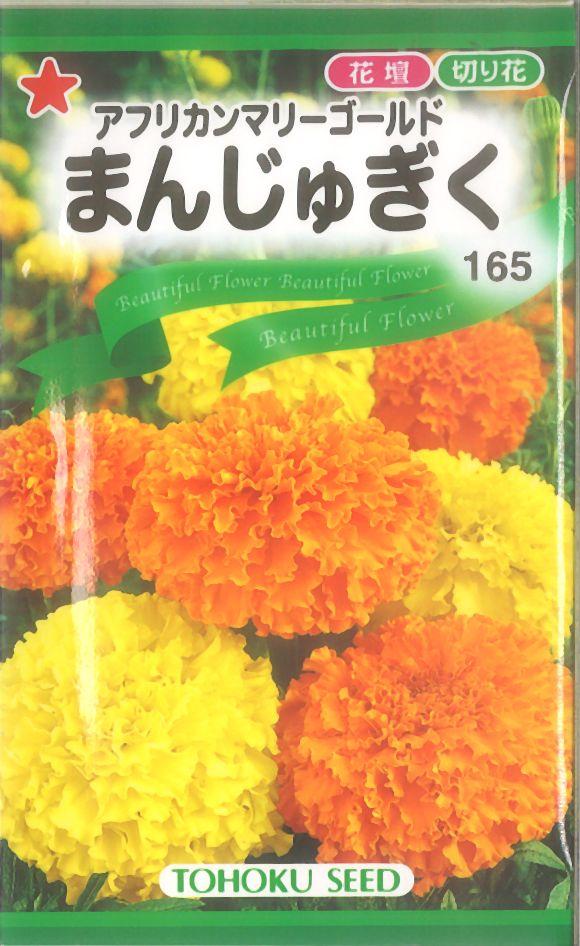 【代引不可】【5袋まで送料80円】 □まんじゅぎく