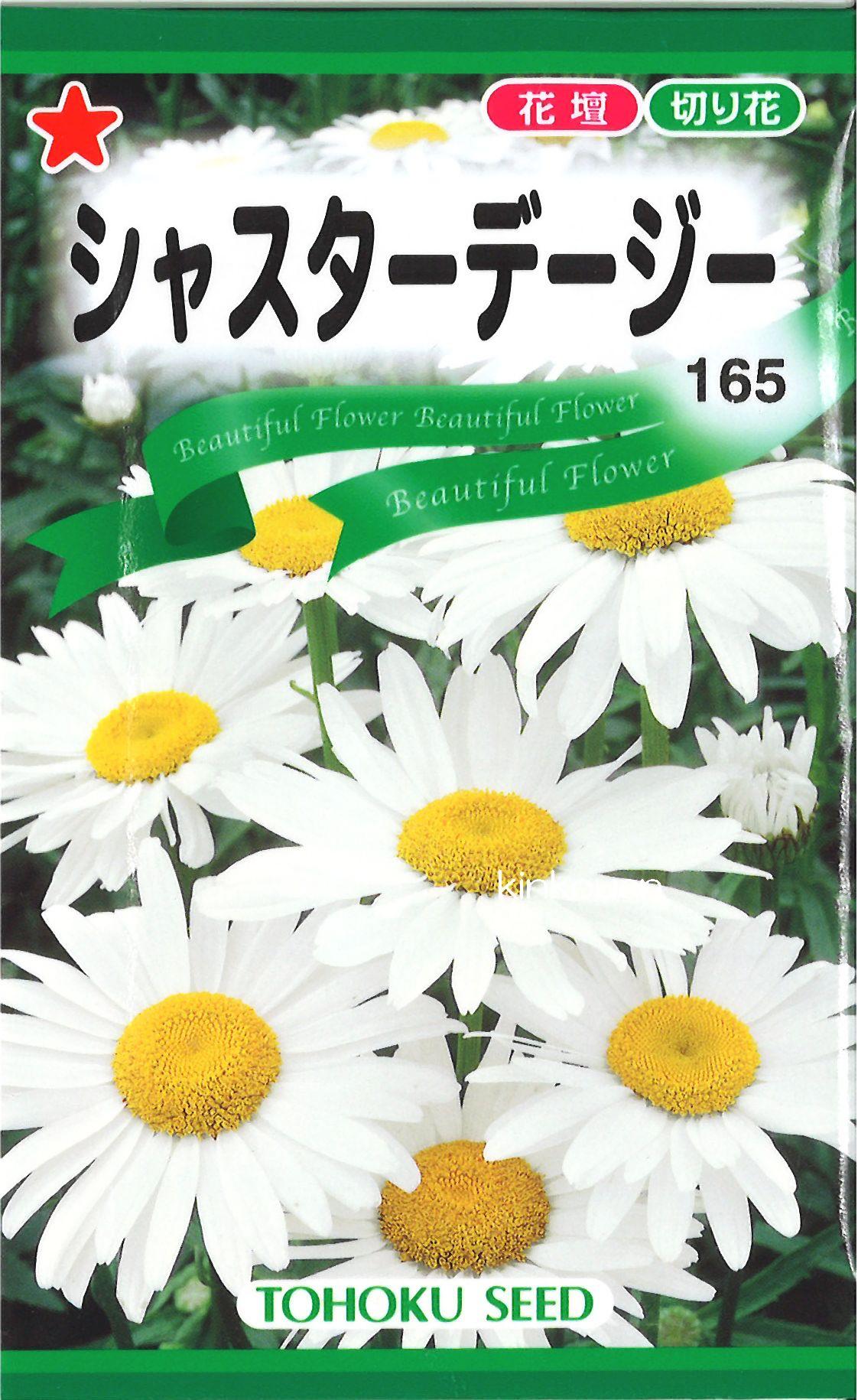 【代引不可】【5袋まで送料80円】 □シャスターデージー