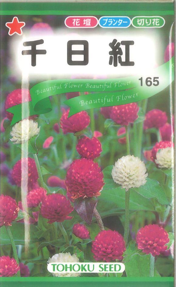【代引不可】【5袋まで送料80円】 □千日紅