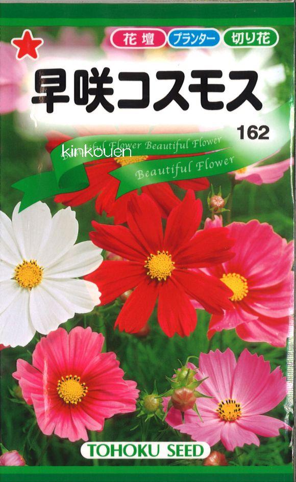 《代引不可》《5袋まで送料80円》 □早咲コスモス