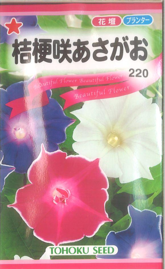 【代引不可】【5袋まで送料80円】 □桔梗咲あさがお