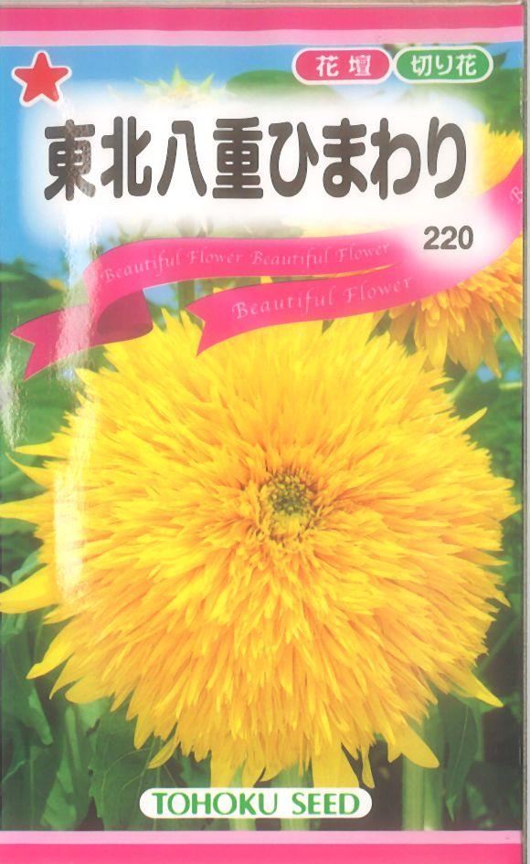 【代引不可】【5袋まで送料80円】 □東北八重ひまわり
