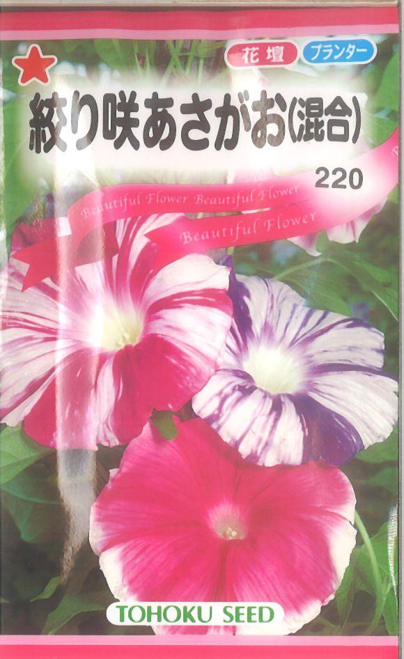 【代引不可】【5袋まで送料80円】 □絞り咲あさがお