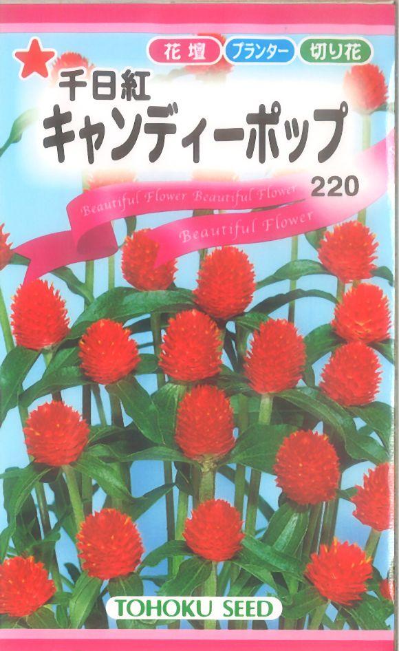 《代引不可》《5袋まで送料80円》 □キャンディーポップ