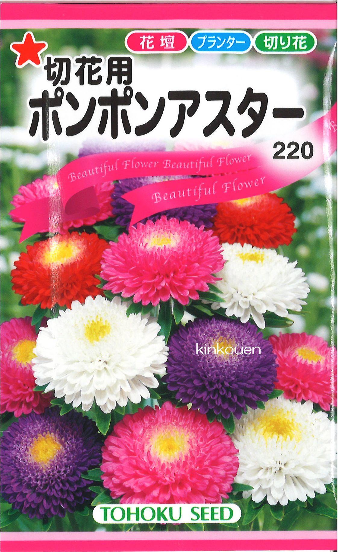 【代引不可】【5袋まで送料80円】 □切花用ポンポンアスター