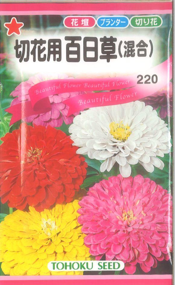 【代引不可】【5袋まで送料80円】 □切花用百日草