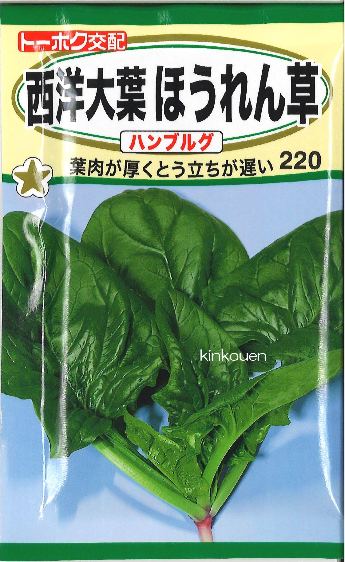 《代引不可》《5袋まで送料80円》 □西洋大葉ほうれん草ハンブルグ