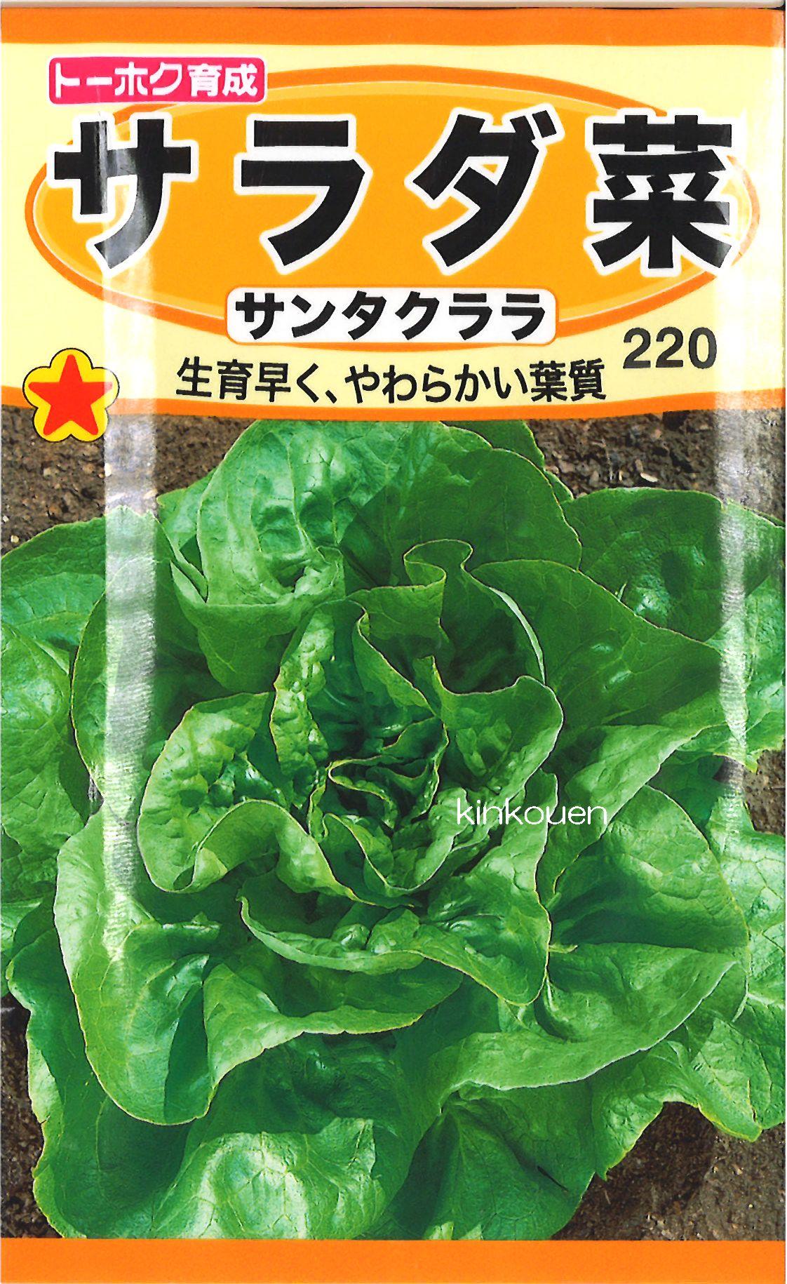 【代引不可】【5袋まで送料80円】 □サラダ菜サンタクララ