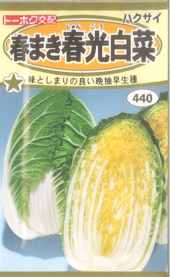 《代引不可》《5袋まで送料80円》 □春まき春光白菜