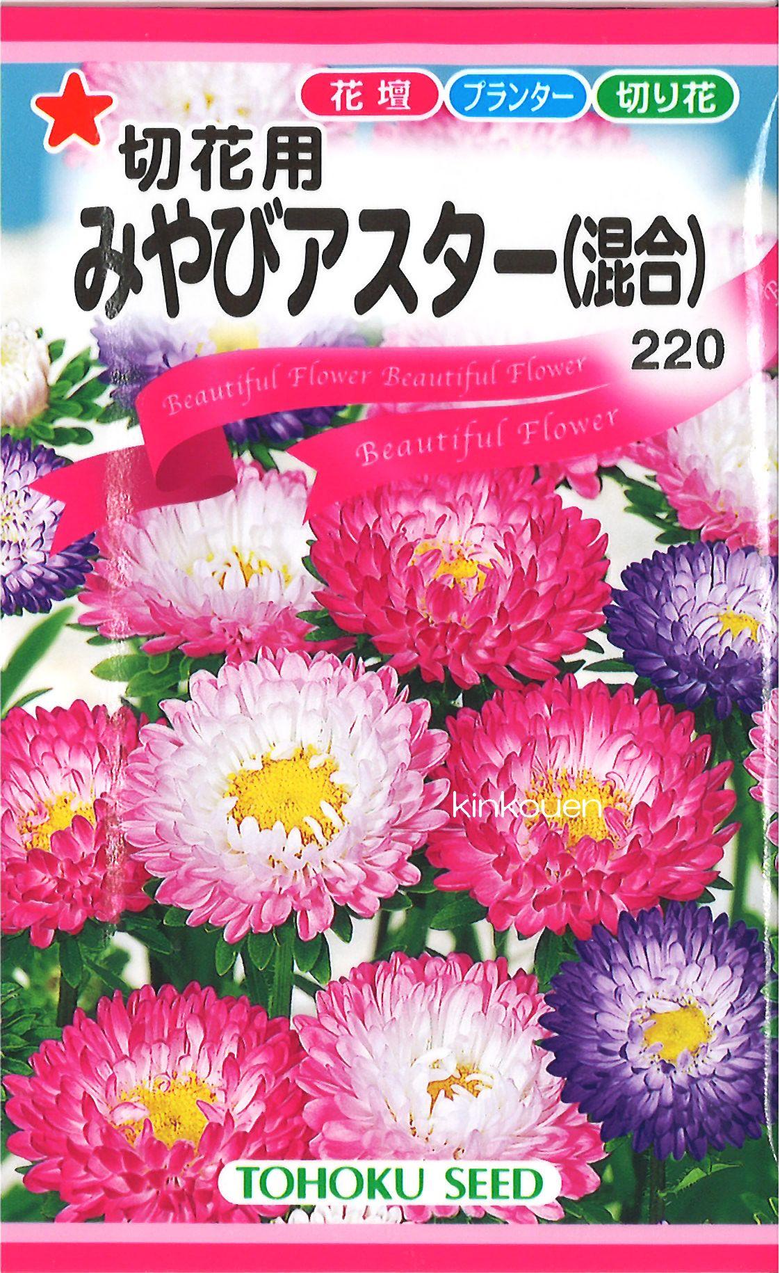 【代引不可】【5袋まで送料80円】 □切花用みやびアスター