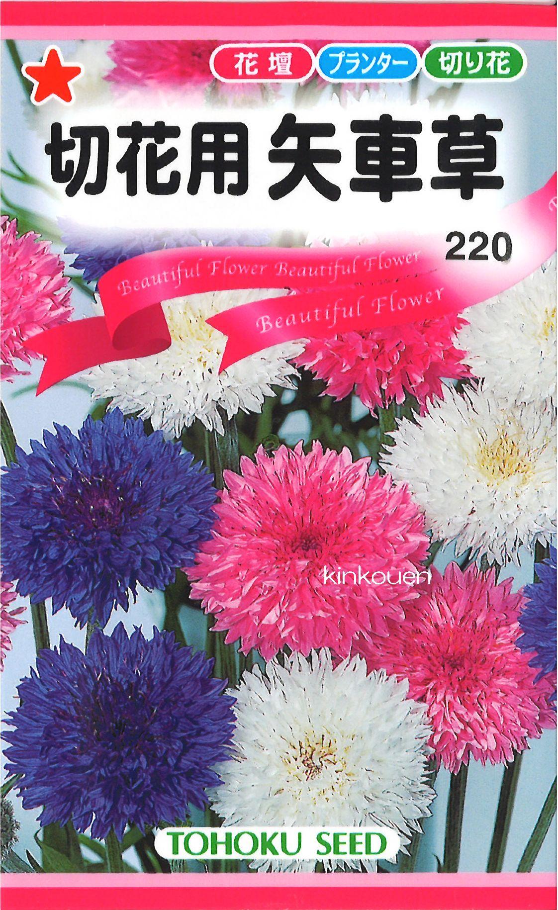 《代引不可》《5袋まで送料80円》 □切花用矢車草