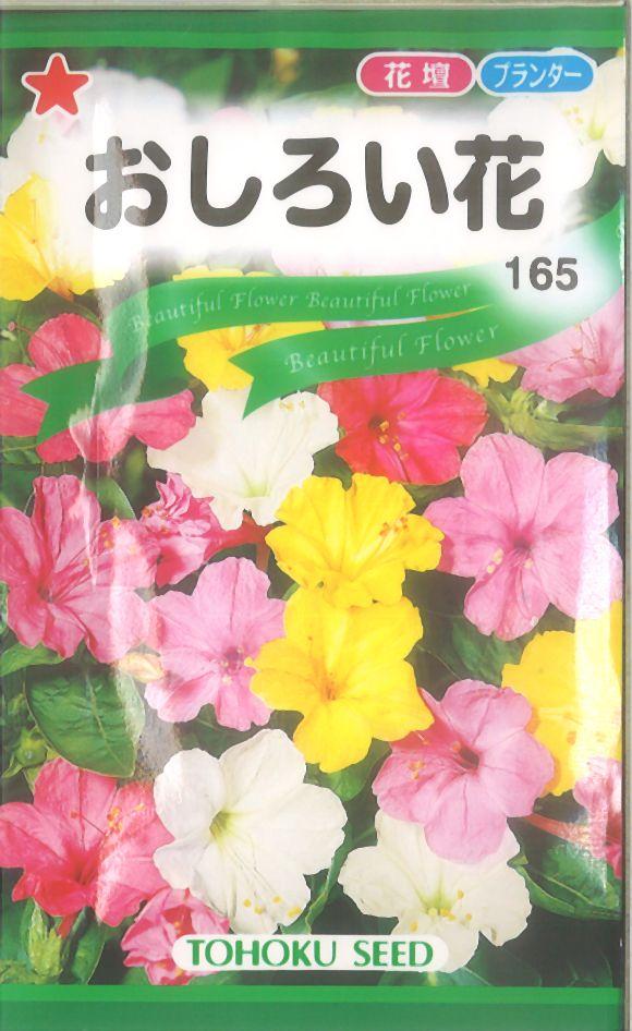 【代引不可】【5袋まで送料80円】 □おしろい花