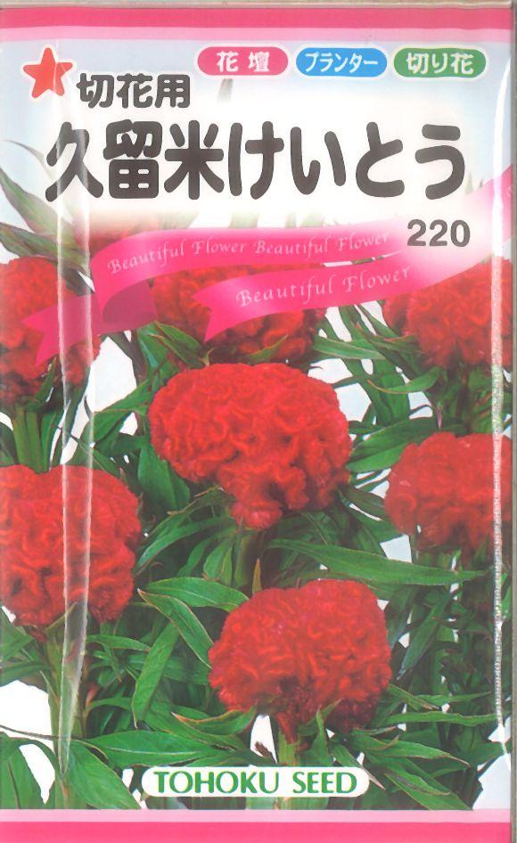 《代引不可》《5袋まで送料80円》 □切花用久留米けいとう