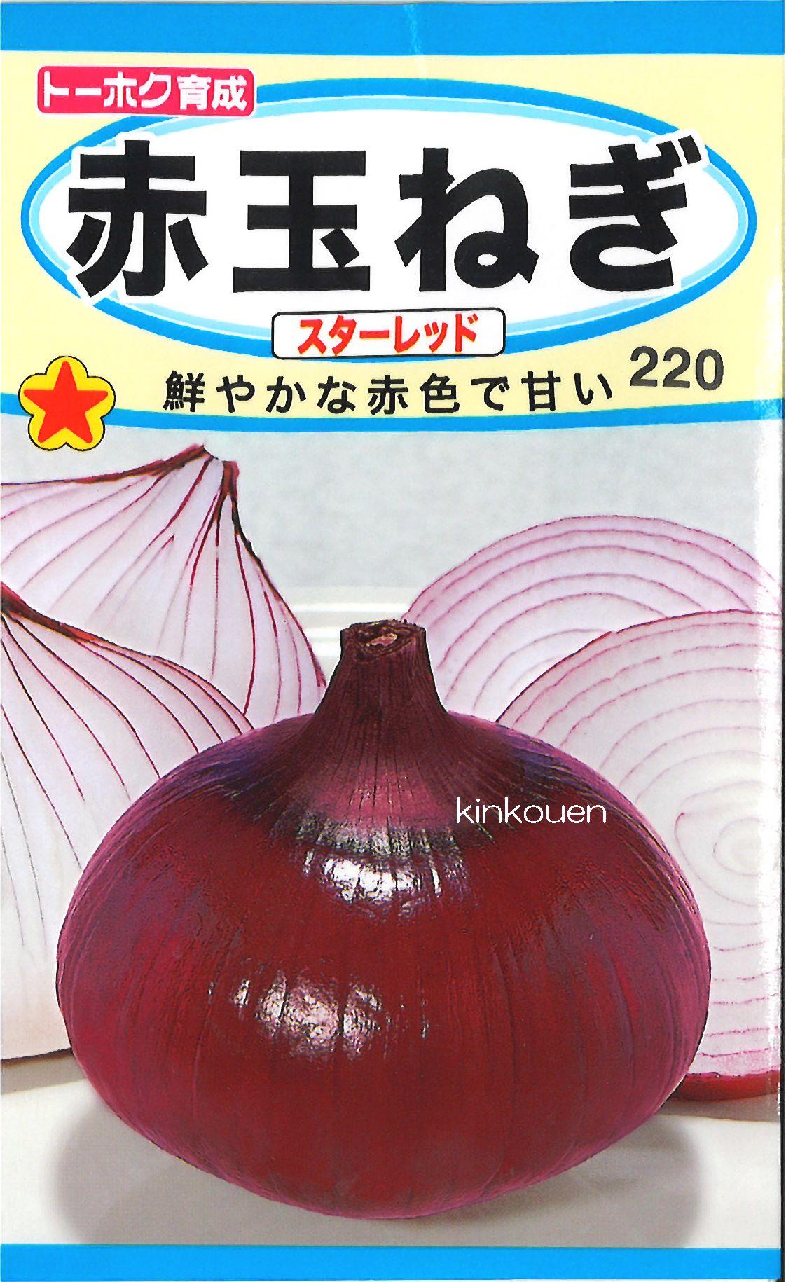 【代引不可】【5袋まで送料80円】□赤玉ねぎスターレッド