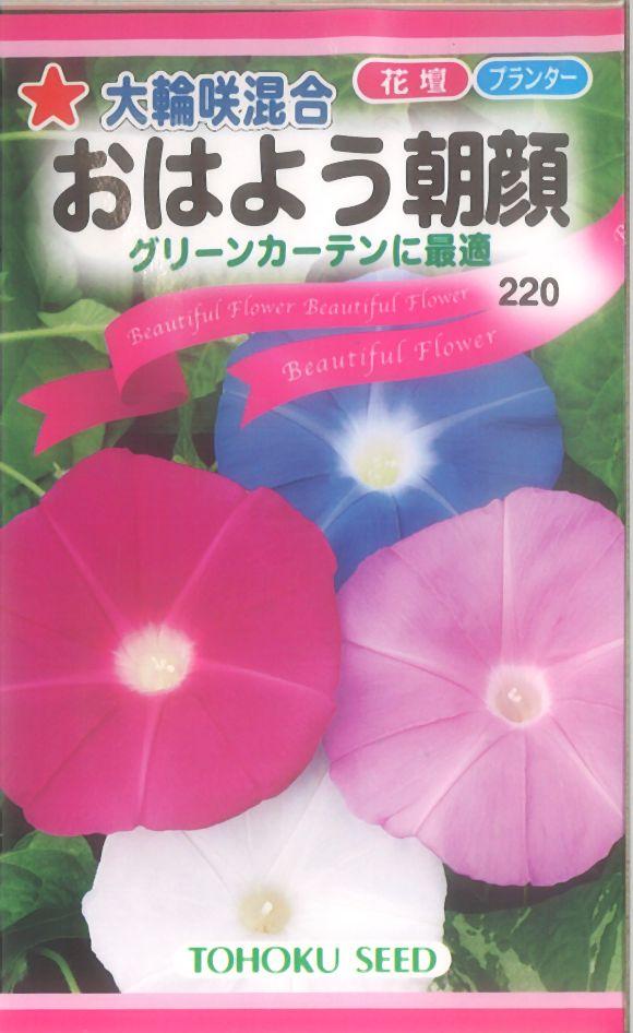 【代引不可】【5袋まで送料80円】 □大輪咲混合おはよう朝顔