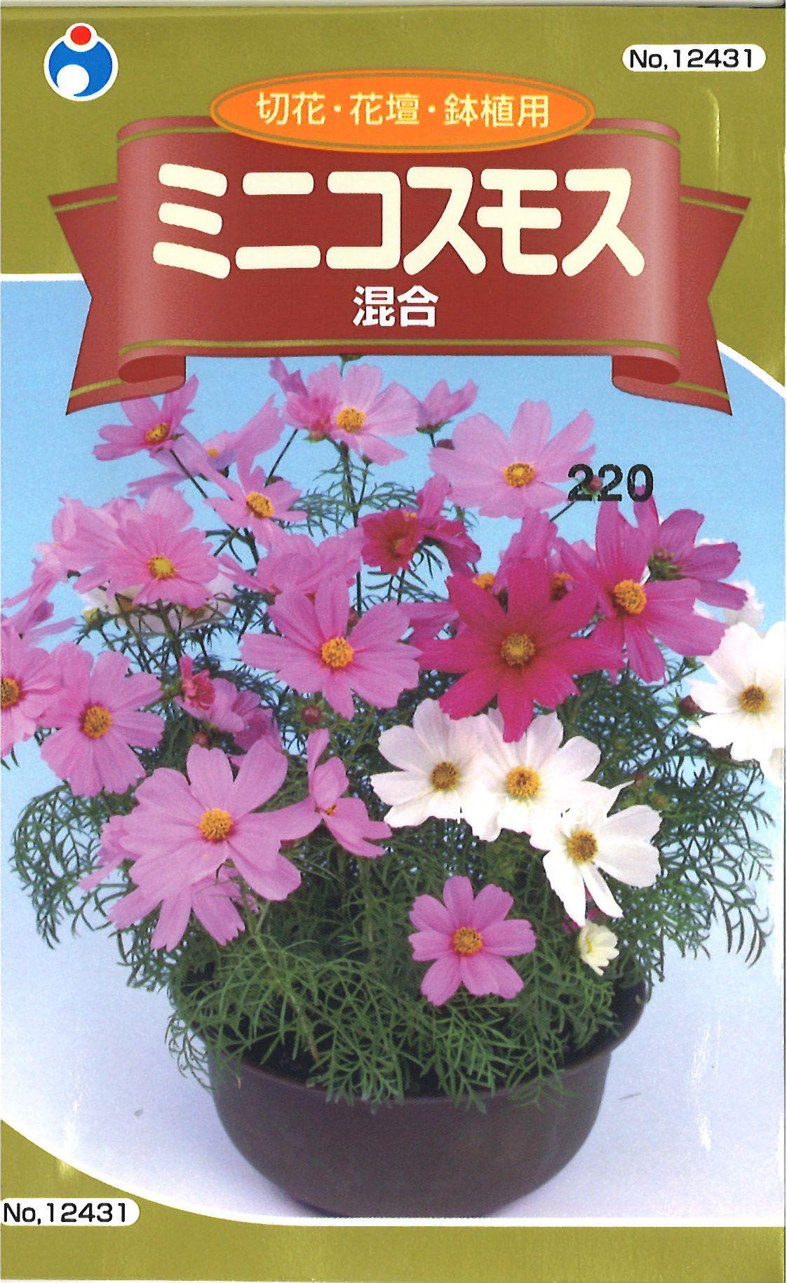 【代引不可】【5袋まで送料80円】□ミニコスモス