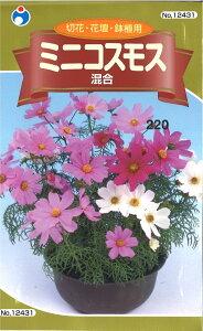 2-1-1【代引不可】【送料5袋まで80円】 □ミニコスモス ■ seed たね tane 種 種子 花の種