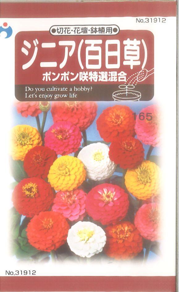≪代引不可≫≪5袋まで送料80円≫ □ジニア百日草ポンポン咲特選混合