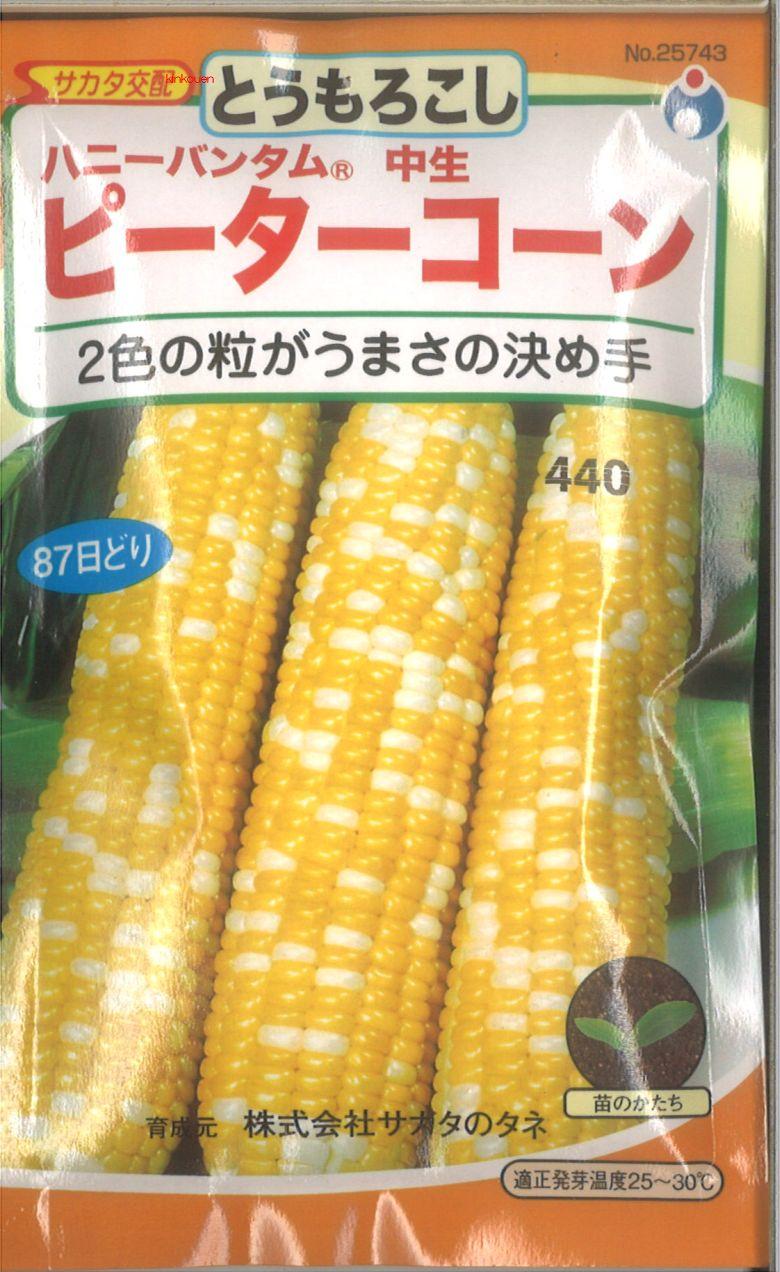 ≪代引不可≫≪5袋まで送料80円≫ □トウモロコシピーターコーン