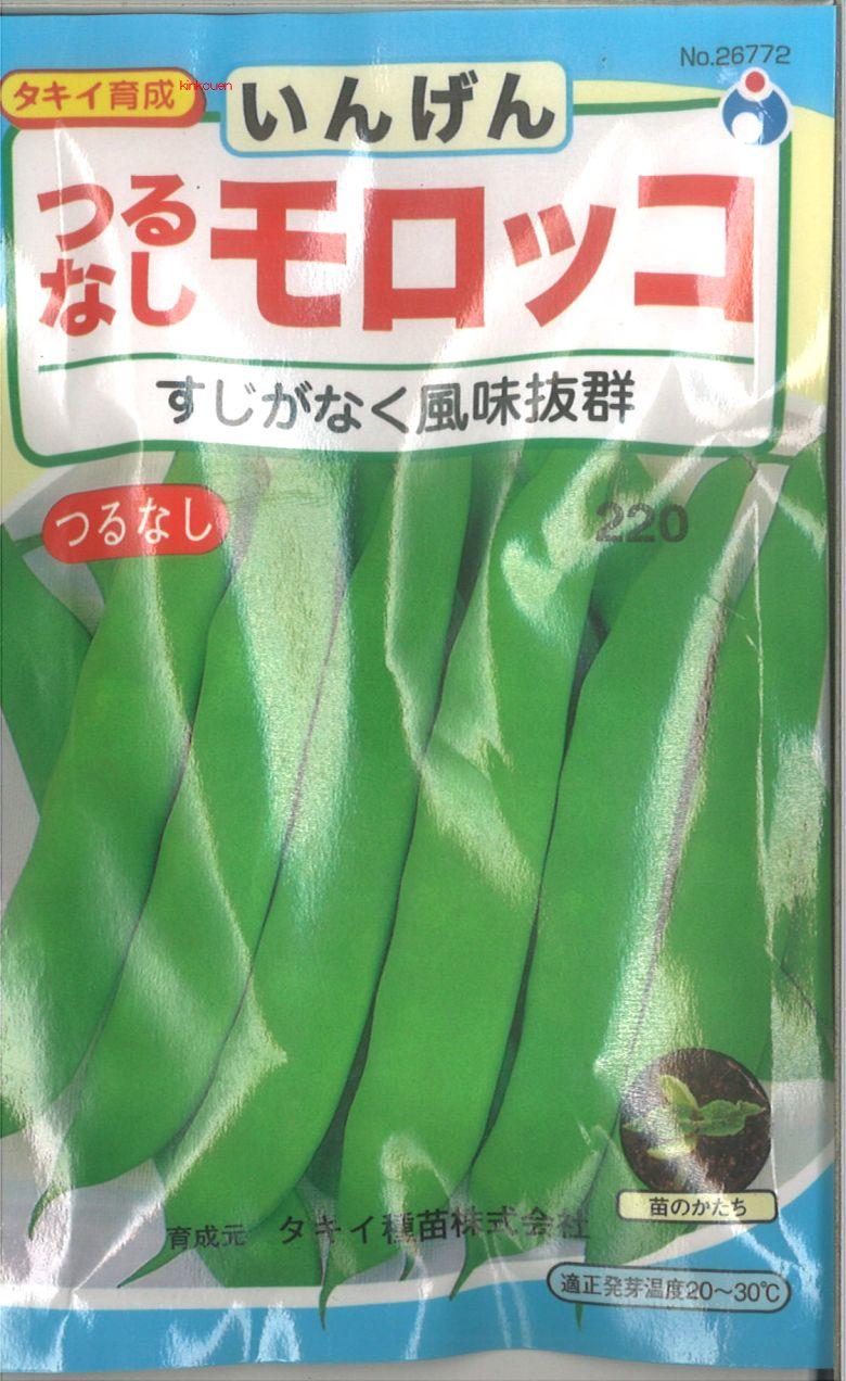 ≪代引不可≫≪5袋まで送料80円≫ □インゲンつるなしモロッコ  モロッコ菜豆