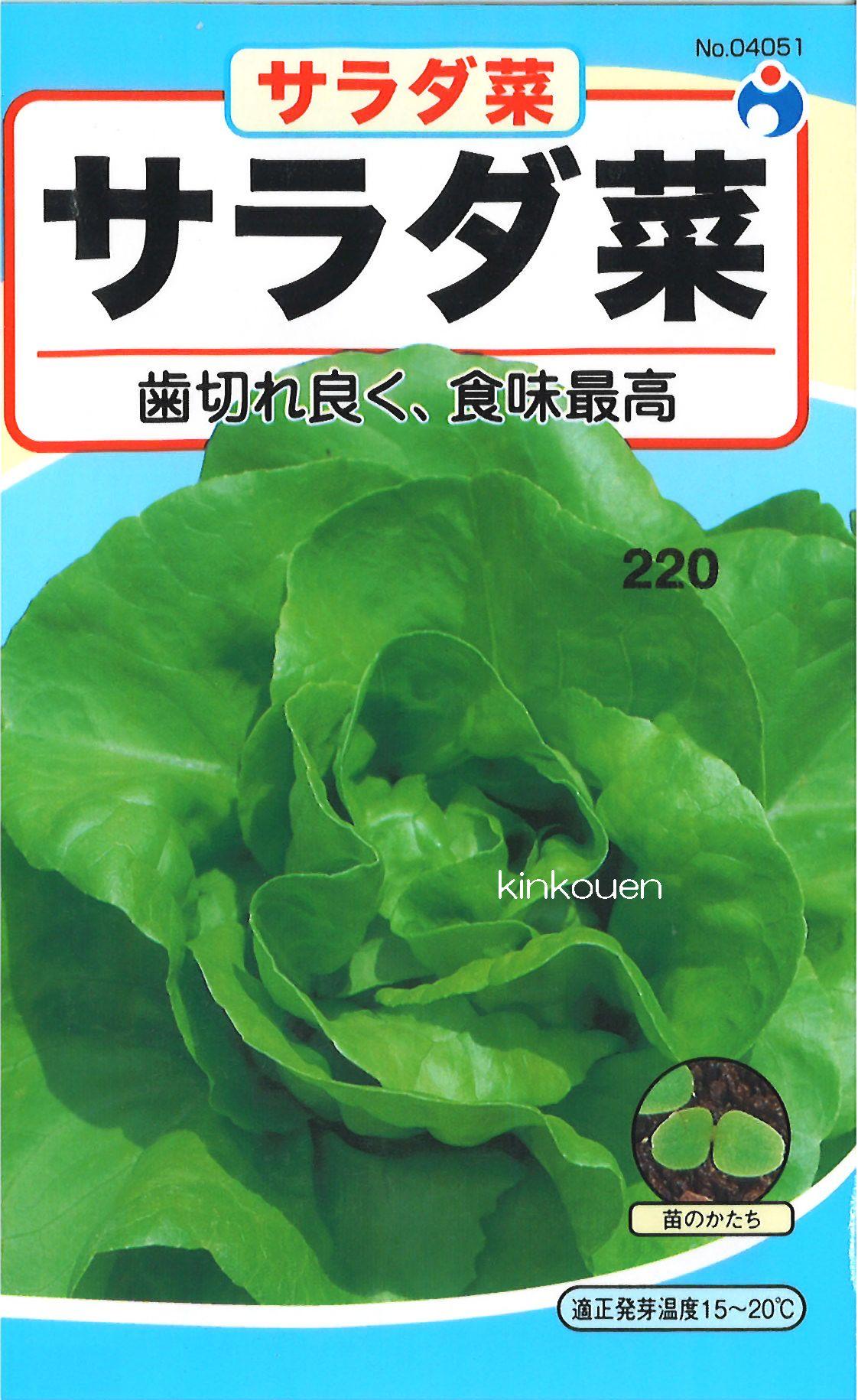 ≪代引不可≫≪5袋まで送料80円≫ □サラダナ サラダ菜