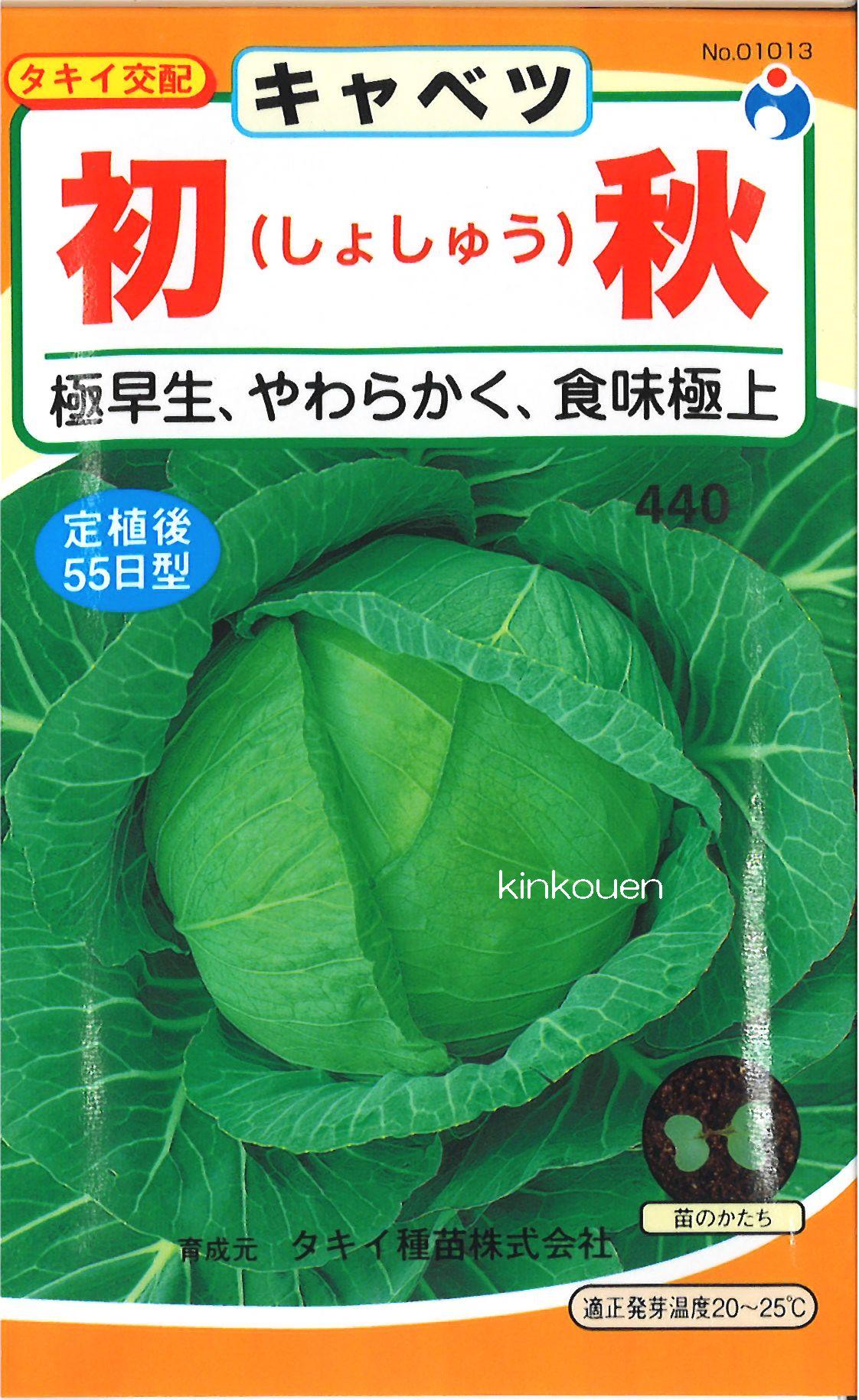 【代引不可】【5袋まで送料80円】□初秋キャベツ