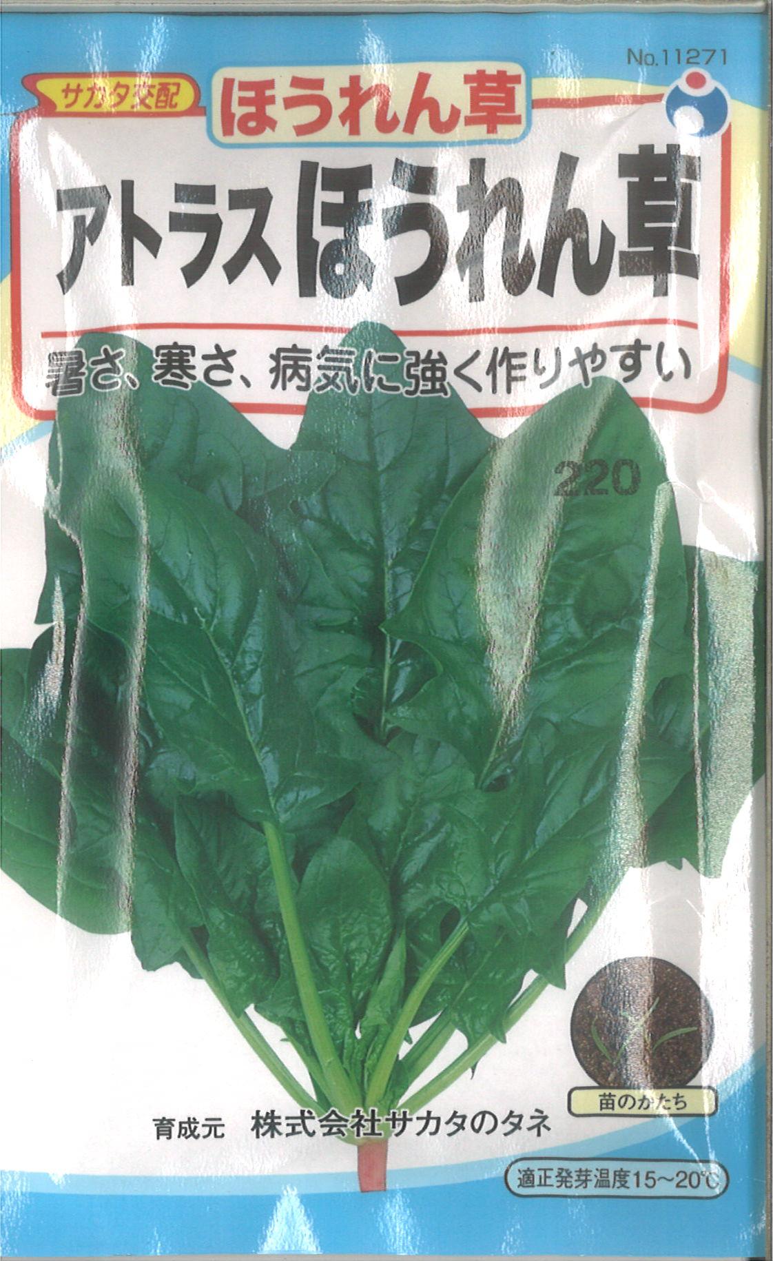 【代引不可】【5袋まで送料80円】 □ ホウレンソウ アトラスほうれん草