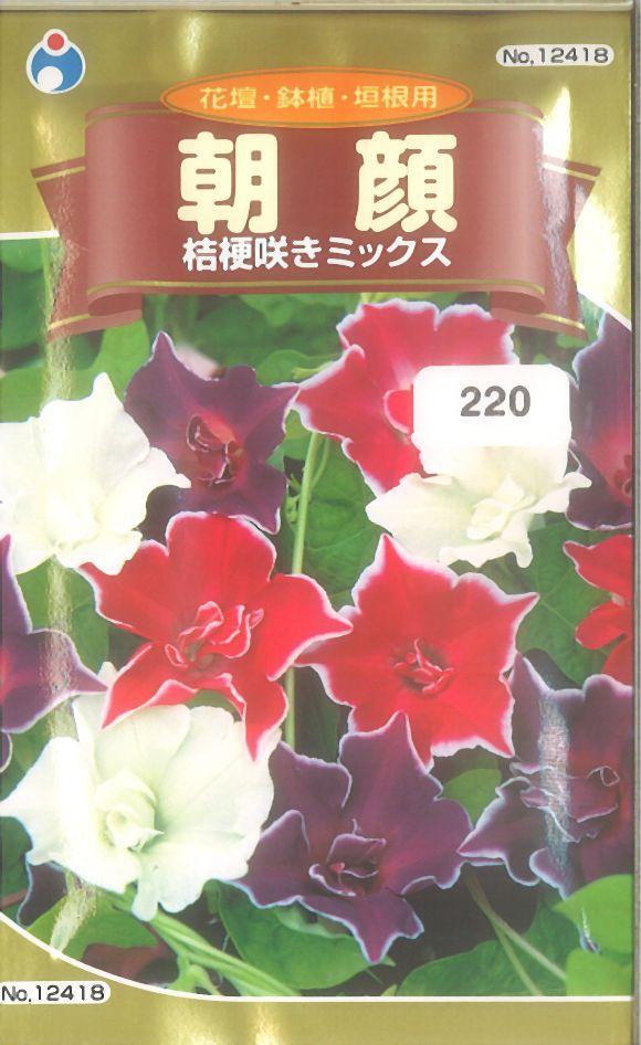 ≪代引不可≫≪5袋まで送料80円≫ □アサガオ朝顔桔梗咲きミックス