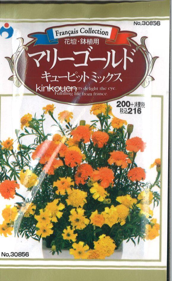 ≪代引不可≫≪5袋まで送料80円≫ □マリーゴールドキューピットミックス