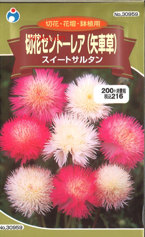 【代引不可】【5袋まで送料80円】 □ 切花セントーレア スイートサルタン