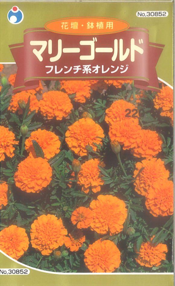 ≪代引不可≫≪5袋まで送料80円≫ □マリーゴールドフレンチ系オレンジ