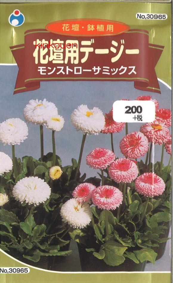 ≪代引不可≫≪5袋まで送料80円≫ □デージー花壇用デージーモンストローサミックス
