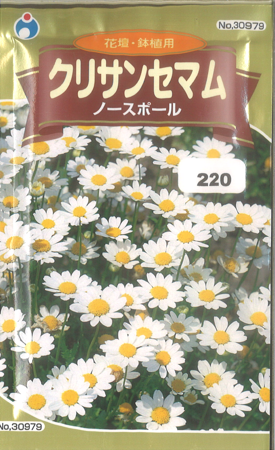 【代引不可】【5袋まで送料80円】□クリサンセマム ノースポール