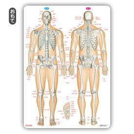 骨 靱帯 関節 名前 下敷き 「骨と関節まるわかりシート」 勉強 学習 覚える A4サイズ 両面カラー プラスチック 暗記 送料無料 キャンペーン