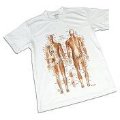 Tシャツ筋肉柄「筋肉チャートデザイン(筋T)」