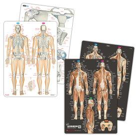 【2枚セット5%OFF】人体 名前 下敷き 「筋肉(改訂版)&骨と関節 人体まるわかりシート2枚セット【ふりがな付き】」 勉強 学習 覚える A4サイズ 両面カラー プラスチック 暗記 送料無料 キャンペーン